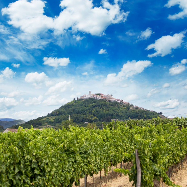 Croatian Wine Tasting – the Vineyard Tour , Villas with pool, holiday houses and hotels in Croatia - Charming Croatia